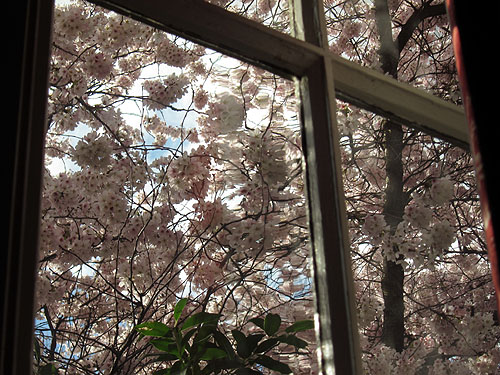 [blossoms and blue sky out of a window]