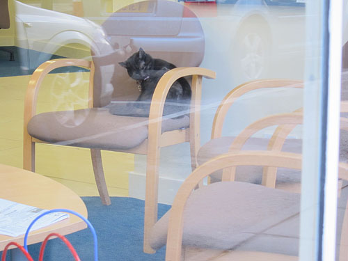cat, hanging out in the chairs inside the bank lobby